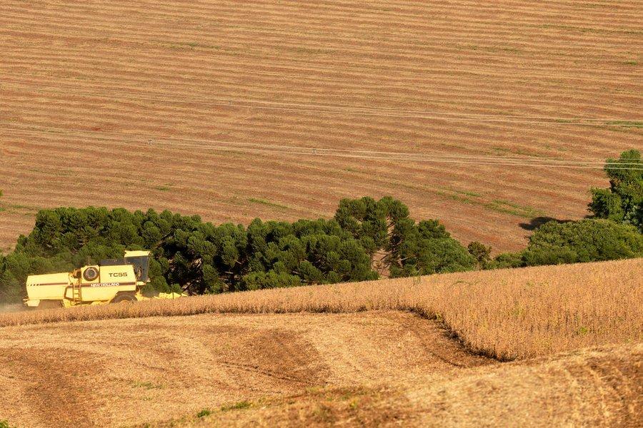 A produção de trigo no Paraná poderá atingir 3,5 milhões de toneladas neste ano, aproximadamente o dobro da colheita anterior, que chegou a 1,8 milhão de toneladas. Foto Chuniti Kawamura/ANPr (arquivo)
