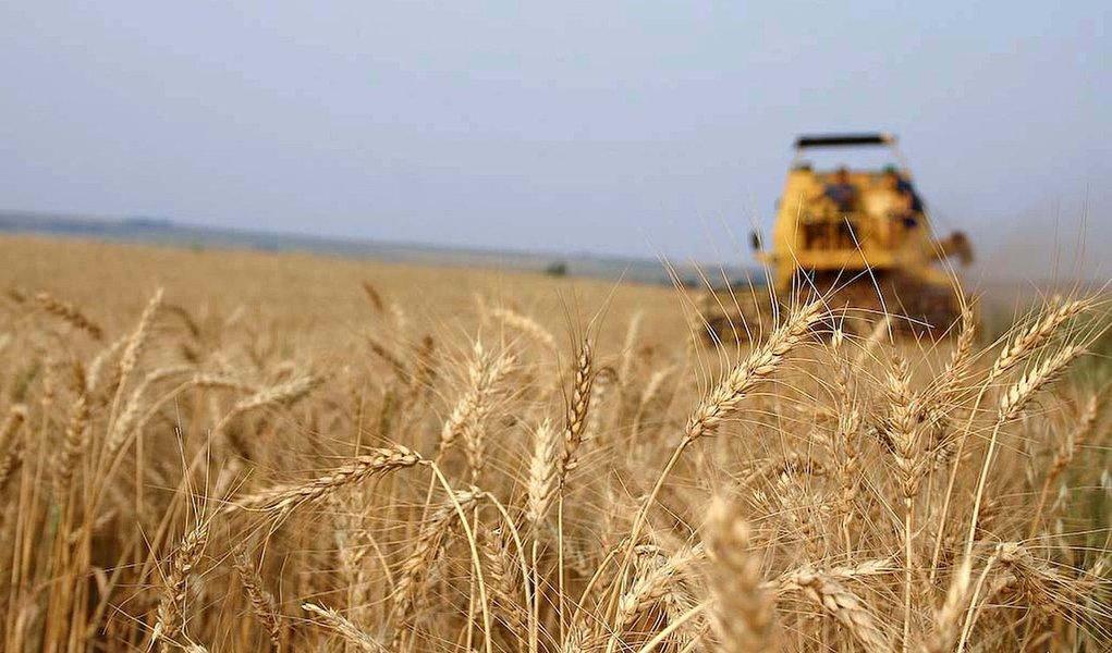 O clima chuvoso em junho e as fortes geadas da segunda quinzena de julho prejudicaram principalmente as lavouras de trigo, café e a segunda safra do milho, no Paraná.  Foto: ANPr