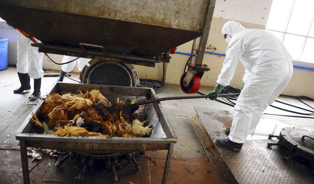 China registra 24 mortes por novo vírus H7N9