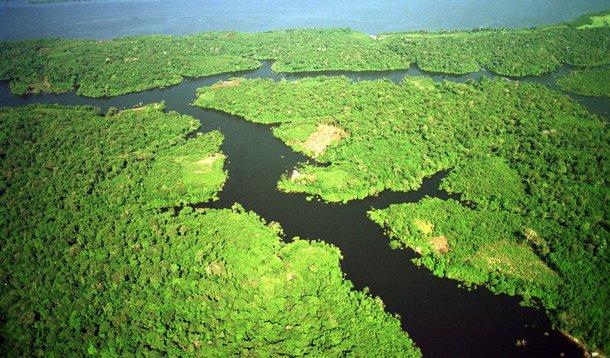 Golpe se preserva também à custa da devastação da Amazônia