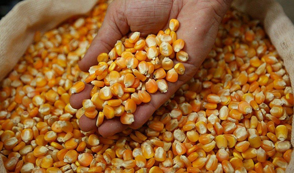 PE recebe mais 4,2 mil t. de milho contra a seca