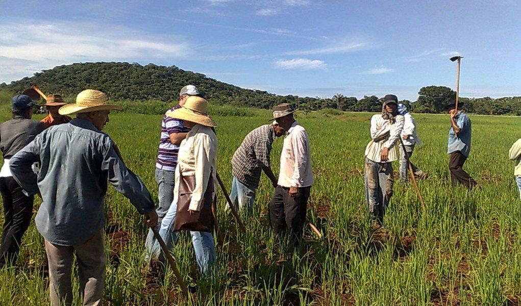 Renda agrícola deve crescer 11% em 2012