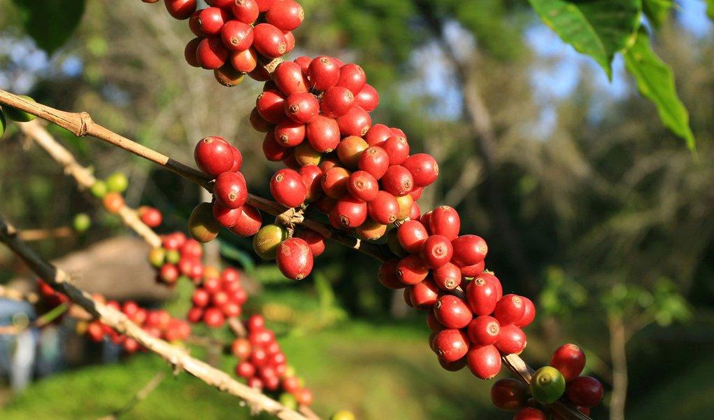 Governo aprova recursos de até R$ 2 bilhões para o café