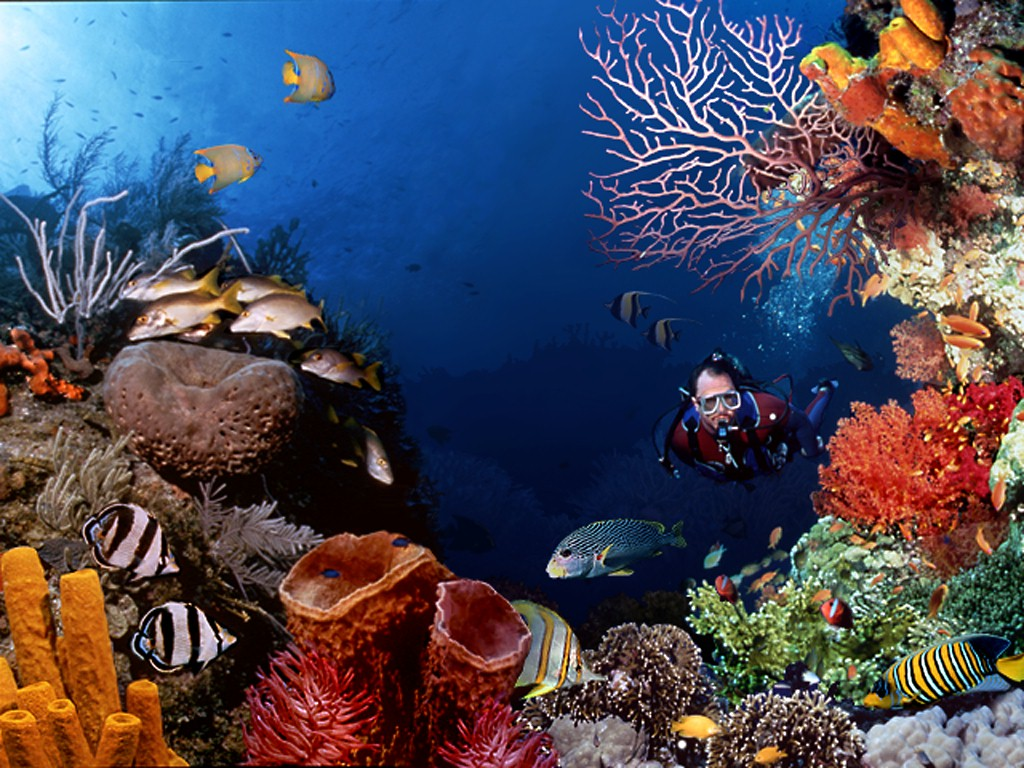Os corais são hoje uma espécie muito ameaçada