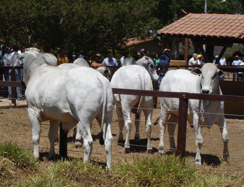 A Associação Brasileira das Indústrias da Alimentação (ABIA) informou que o setor de laticínios, por exemplo, deixou de coletar 51 milhões de litros de leite por dia nas fazendas, e o produto vem sendo descartado; o setor estima um impacto de R$ 180 milhões por dia no segmento; a associação também projeta uma perda acumulada de R$ 1 bilhão na área de proteína animal