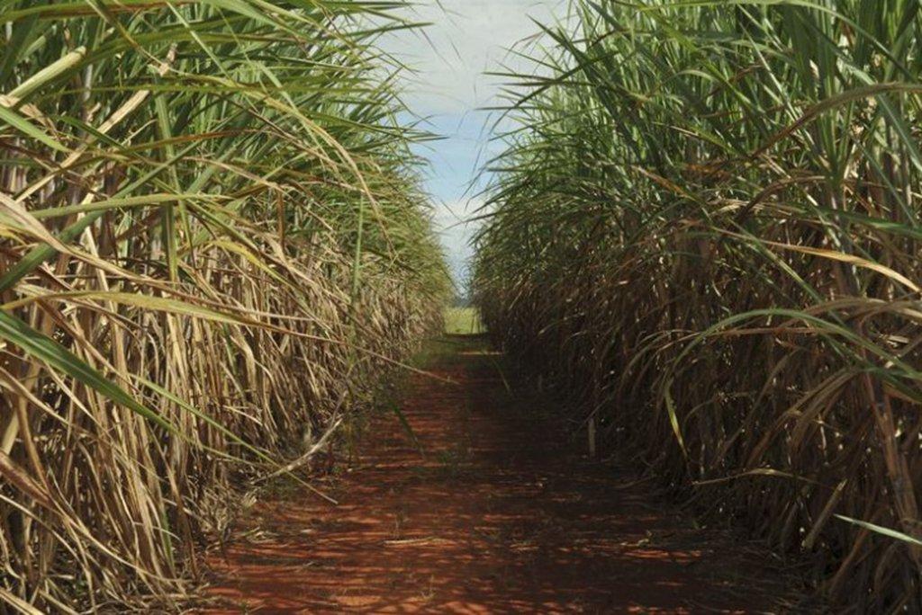 A produção de cana-de-açúcar no Brasil registrou, na safra 2017/2018, queda de 3,6% na comparação com a safra anterior; foram produzidos 633,26 milhões de toneladas, ante 657,18 milhões obtidos no ano anterior; os números do encerramento da safra 2017/2018 foram divulgados pela Companhia Nacional de Abastecimento (Conab)