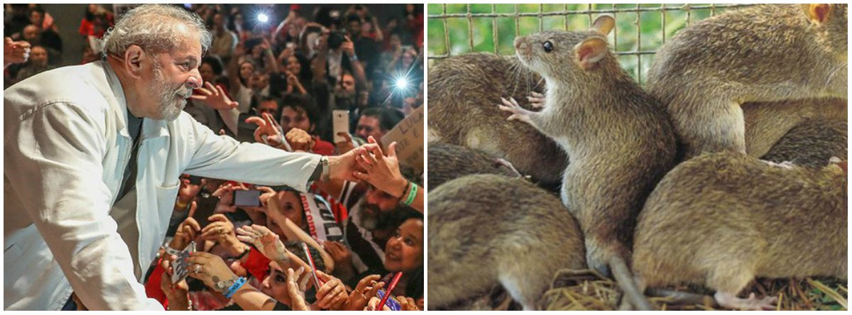O povo tem um antídoto, todo cidadão brasileiro tem um remédio imediato. Lula livre. Lula vivo contra a peste. No Brasil invadido, somos todos caça-ratos