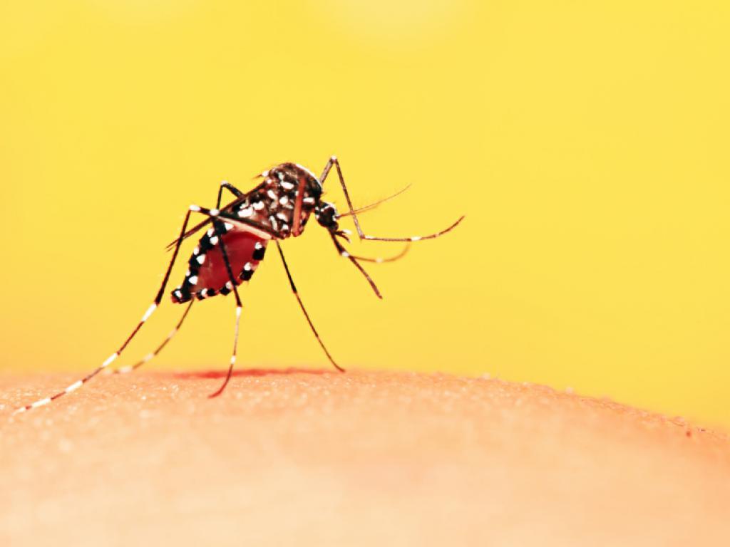 A Prefeitura de Nova Lima informou que outros três casos suspeitos de febre amarela foram registrados no município; até o momento, a cidadetem seis mortes, dois casos confirmados e oito em investigação para a doença