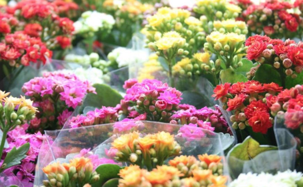 Foram iniciadas as obras de construção do Mercado das Flores e Plantas Ornamentais, que contará com 1.455 metros quadrados (m²) de área total na Praça Joaquim Távora, na Avenida Pontes Vieira. Para abrigar os comerciantes, o local contará com 39 lojas de 18 m² cada um. A previsão é que seja entregue em agosto deste ano