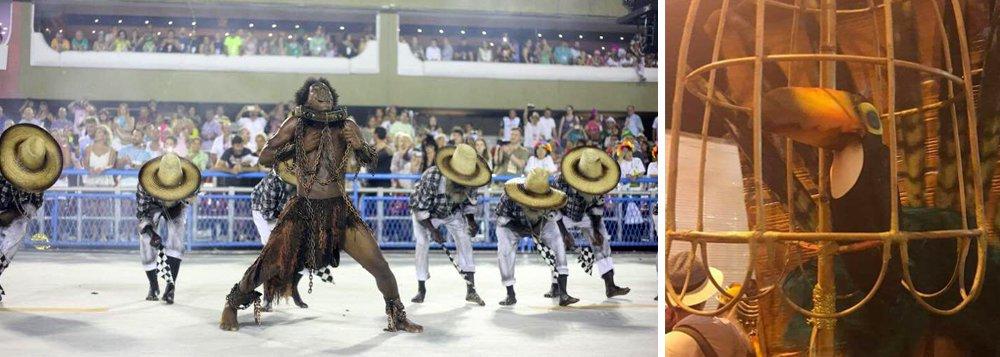 A escola de samba Paraíso de Tuiuti, que denunciou na Sapucaí o golpe e mostrou Michel Temer como vampiro, também pôs um tucano dentro de uma gaiola, algo que não acontece na vida real; a foto publicada no Twitter pela internautaAnna Lú