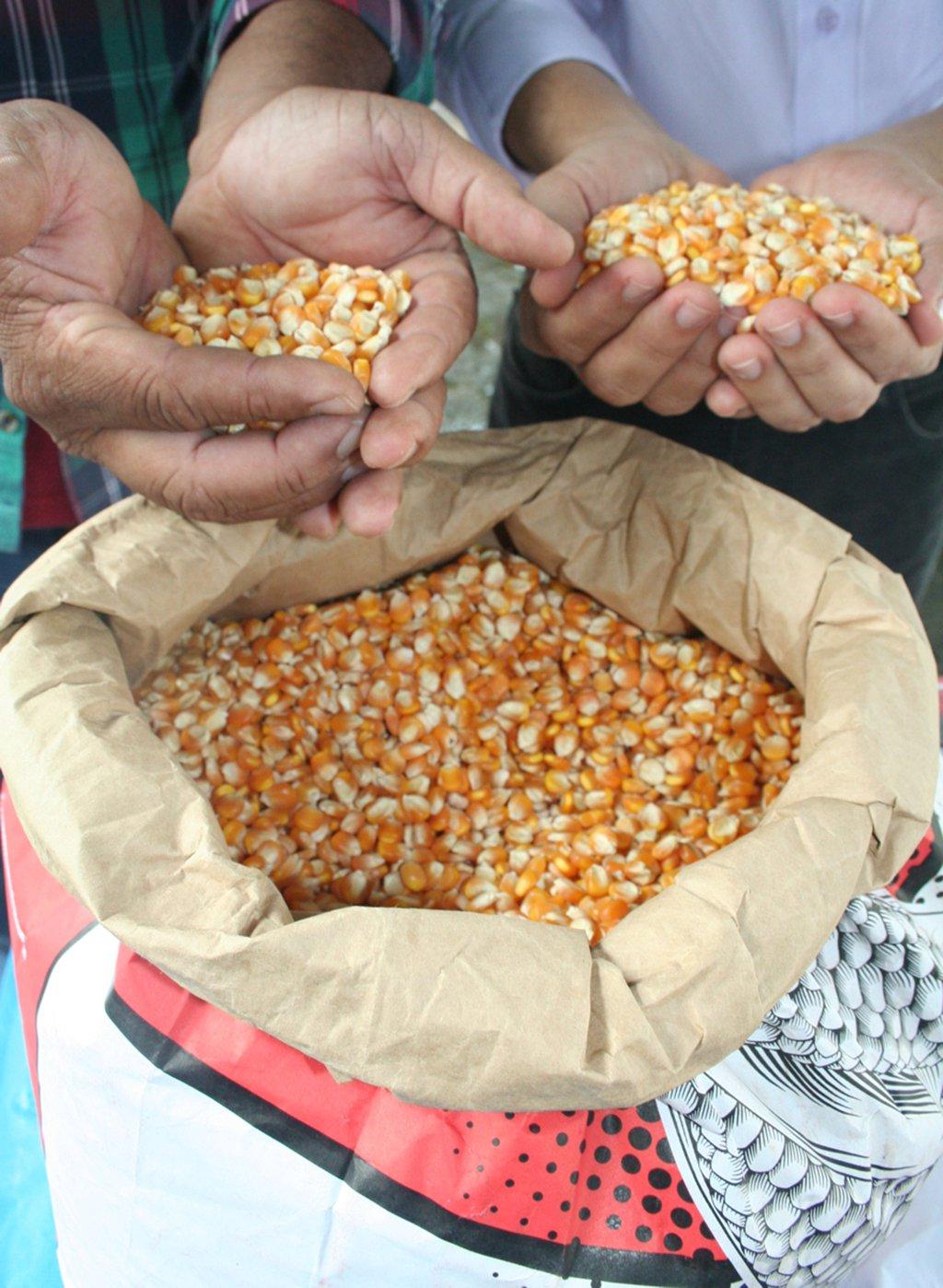Com pequena área territorial, Sergipe vem se destacando na produção de grãos do Nordeste; para a safra 2016/2017, a expectativa, conforme a Conab, é que o estado apresente variação positiva de 317,1%, a maior da região; em segundo lugar está o Ceará, com 182,1%; em todo o Nordeste, o crescimento será de 85%