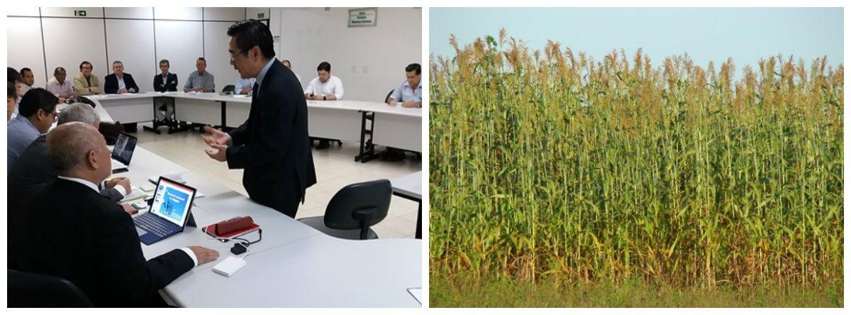 Encontro entre representantes de uma empresa japonesa e técnicos da Secretaria de Agricultura de Alagoas, decidiu pela criação de um grupo de apoio para os projetos de pesquisas com materiais do sorgo, que serão desenvolvidas pelos japoneses; ainda este ano, começam a ser implantadas três áreas com materiais de experimento de sorgo em áreas produtivas de cana de açúcar