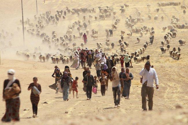 Refugiados yazidi que perderam tudo vagam a esmo pelas montanhas da fronteira dom Iraque com a Síria.