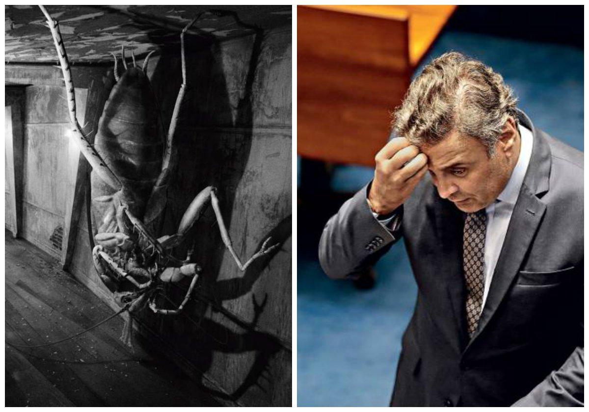 """""""Em uma gelada manhã de junho Aecio Samsa acordou transformado numa repulsiva barata"""", escreveu Fernando Morais, ao saber que o senador afastado Aécio Neves (PSDB-MG) dissera a aliados viver uma situação """"kafkiana""""; Aécio, decerto, se referia a """"O Processo"""", mas sua história se encaixa mais com """"A Metamorfose"""""""