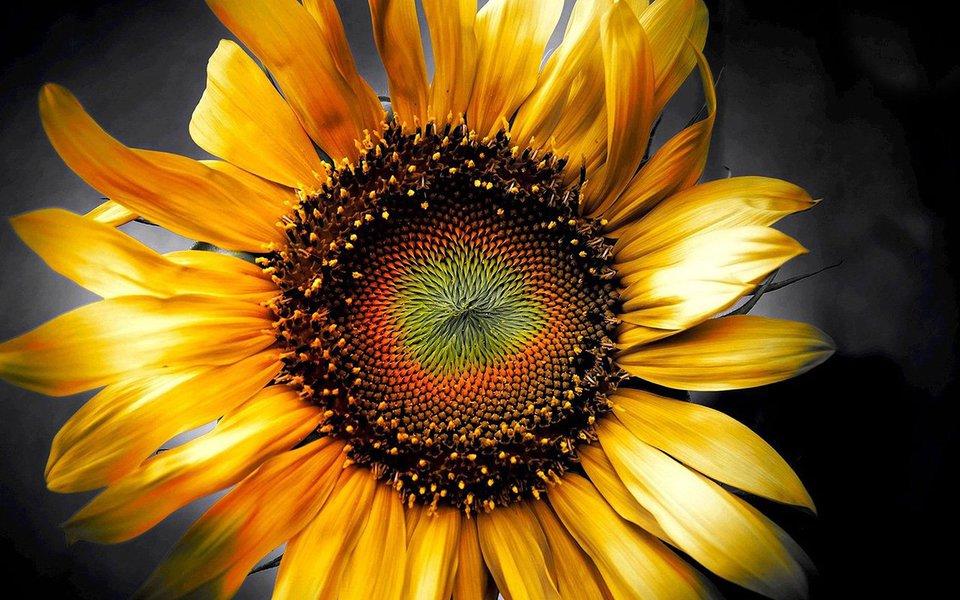 """O universo pode ser caótico e imprevisível, mas ele é também um mundo físico altamente organizado e assentado com precisão nas leis da matemática. Um dos modos mais fundamentais através dos quais essas leis se manifestam é o da """"proporção áurea"""", regida por um valor matemático conhecido desde a remota antiguidade como """"número de ouro"""". Na natureza, a proporção aparece em toda a parte e cria formas de extraordinária beleza."""