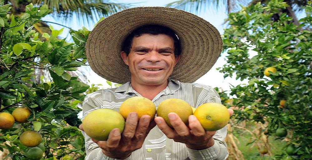 Sergipe desponta no Nordeste brasileiro como segundo estado a apresentar crescimento nas exportações do agronegócio; dados dos Ministérios da Indústria e Comércio Exterior (MDIC) e da Agricultura e Pecuária (Mapa) mostram que o avanço foi de 9,7%; cultura mais forte é a de citrus, sendo Sergipe o 4º maior produtor do país de laranja; ao todo, 14 municípios da região Centro-Sul sergipana compõem o polo produtivo; de acordo com o secretário de Estado da Agricultura, Esmeraldo Leal, apesar da crise internacional do setor de citricultura, Sergipe continua batendo recorde de exportação