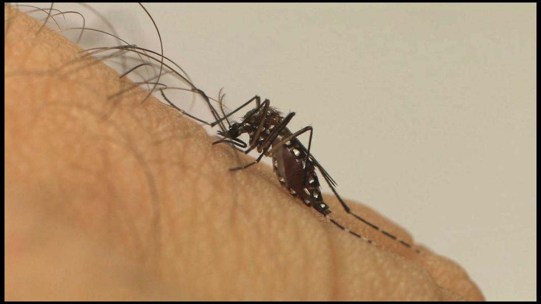 O governo do Piauí alerta àpopulação para manter-se vigilante nos cuidados contra o mosquito Aedes aegypti, pois os boletins registraram uma redução de casos de dengue e zika, mas há um aumento de pessoas afetadas pela chikungunya; houve uma redução de 2,5% nos casos de dengue, em relação ao mesmo período de 2016; de 01 de janeiro a 22 de novembro deste ano, foram 5.050 casos notificados em 128 municípios