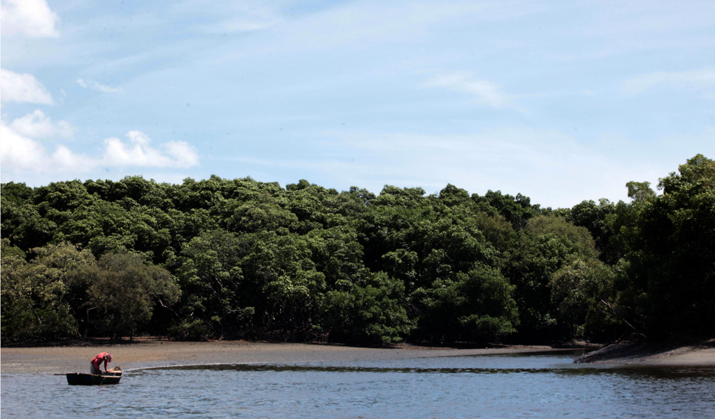 """De domingo (4) a domingo (11), a Prefeitura de Fortaleza promove a Semana do Meio Ambiente 2017, com o tema No lugar de lixo, árvores e flores"""". A programação reúne diversas atividades como educação ambiental, plantios, limpezas e passeio ciclístico. Confira"""