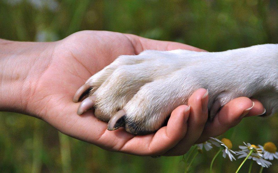 Quem gosta de cachorro sabe muito bem do calor afetivo e o conforto de uma presença sincera que seus companheiros caninos proporcionam. Mas talvez não saiba que ter um cão pode ajudar a melhorar a saúde do coração. É o que sugere um crescente corpo de evidências levantadas por pesquisas conduzidas na Harvard University.