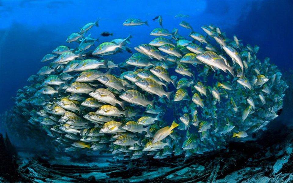 Mais uma vez, o Underwater Photographer of the Year – o mais importante concurso de fotos submarinas do mundo – reúne imagens maravilhosos e revela ângulos inéditos do fascinante universo que se esconde nas profundezas do mar.