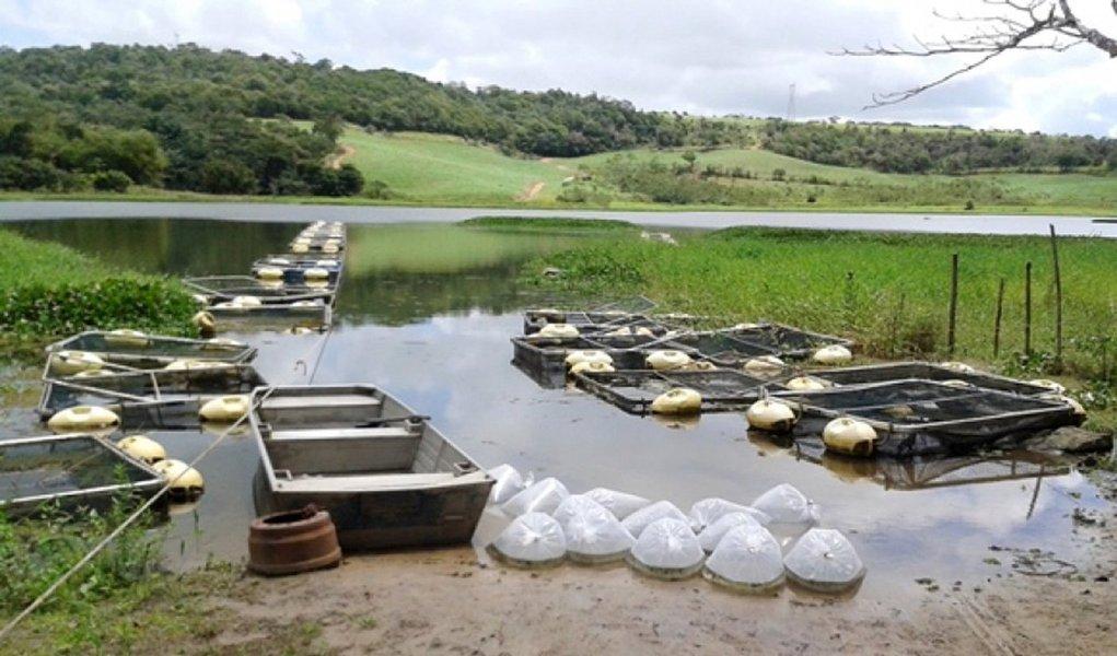 O governo de Alagoas, através da Secretaria de Agricultura, Pecuária, Pesca e Aquicultura, distribuiu 143,6 mil alevinos de tilápia, oriundos das estações de piscicultura de Rio Largo e Xingó; o programa possui 17 módulos de tanques-rede distribuídos por todas as regiões do Estado, atendendo a 20 famílias cada um