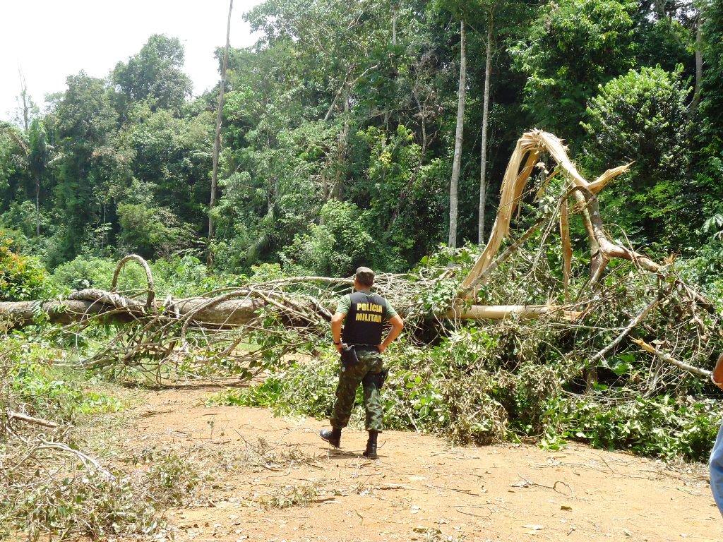 Flona Pará foresta Amazônia