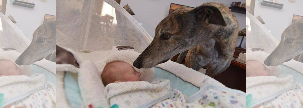 A incrível história de Mosley: foi preciso que o animal conhecesse o homem em sua essência (um bebê) para parar de temê-lo