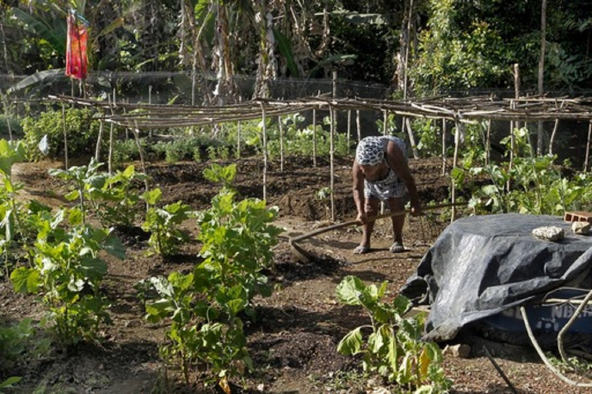 Município de Ibirapitanga, assentamento Paulo Jackson, agricultura familiar. Fotos: Pedro Moraes/GOVBA