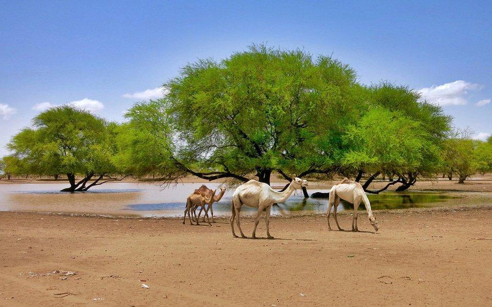 Um Mediterrâneo mais quente transforma o árido Sahel – toda a parte sul do deserto do Saara - em uma zona mais úmida. O aumento da temperatura no mar leva mais chuva para essa região árida. Hoje, o Sahel é bem mais verde do que era há uma dezena de anos.