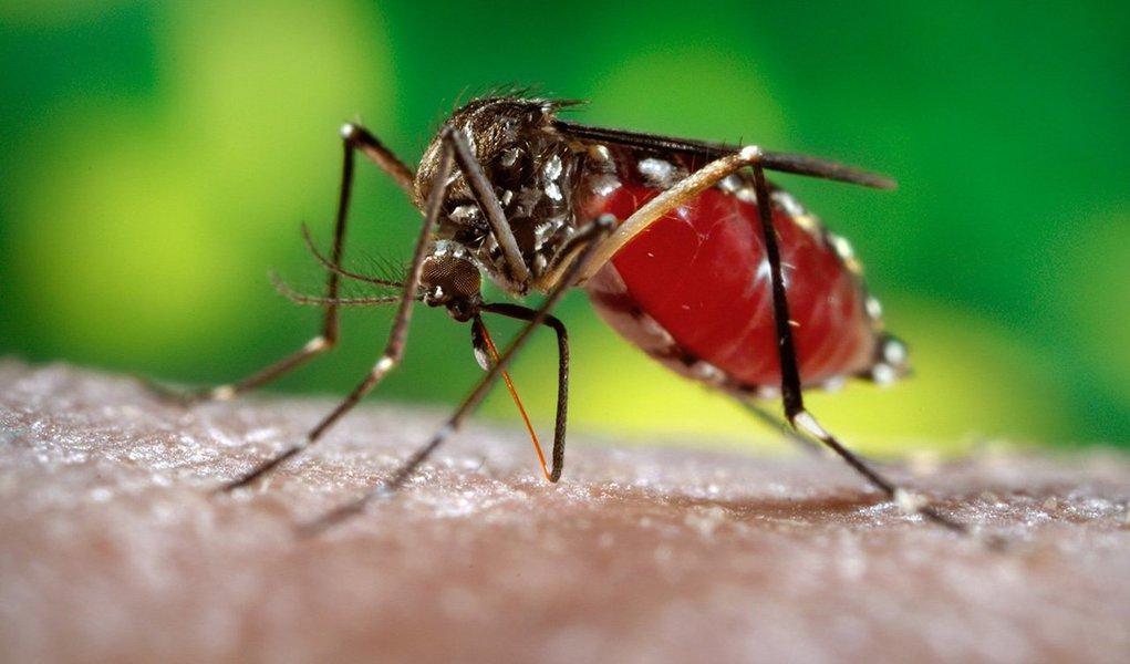 O aumento desenfreado dos casos suspeitos de febre chikungunya em Alagoas tem chamado a atenção e preocupado as autoridades que lidam com a saúde pública no estado; o vírus é transmitido pelo mosquito Aedes aegypti, também vetor do zika vírus, da dengue e febre amarela; somente este ano, mais precisamente de janeiro a maio, foram registrados 6.400 casos suspeitos da febre; no ano passado inteiro, foram 127; não há registro desta doença em 2014