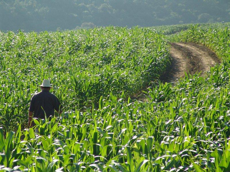Os agricultores poderão fazer o pagamento do boleto, no valor de R$ 17,00 até o dia 29 de janeiro.Já foram gerados até agora, 255 mil e 821 boletos.