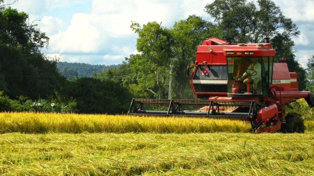 A Companhia Nacional de Abastecimento (Conab) aponta uma queda de 19,5% na colheita de grãos no Maranhão, safra 2015/16; de acordo com a estatal, devem ser produzidas este ano, no estado, 3,328 milhões de toneladas, sendo que no levantamento anterior a estimativa era de 3,566 milhões de toneladas, enquanto a colheita da safra 2014/15 teve um resultado de 4,134 milhões de toneladas, o ou seja, este ano serão 806 mil toneladas a menos