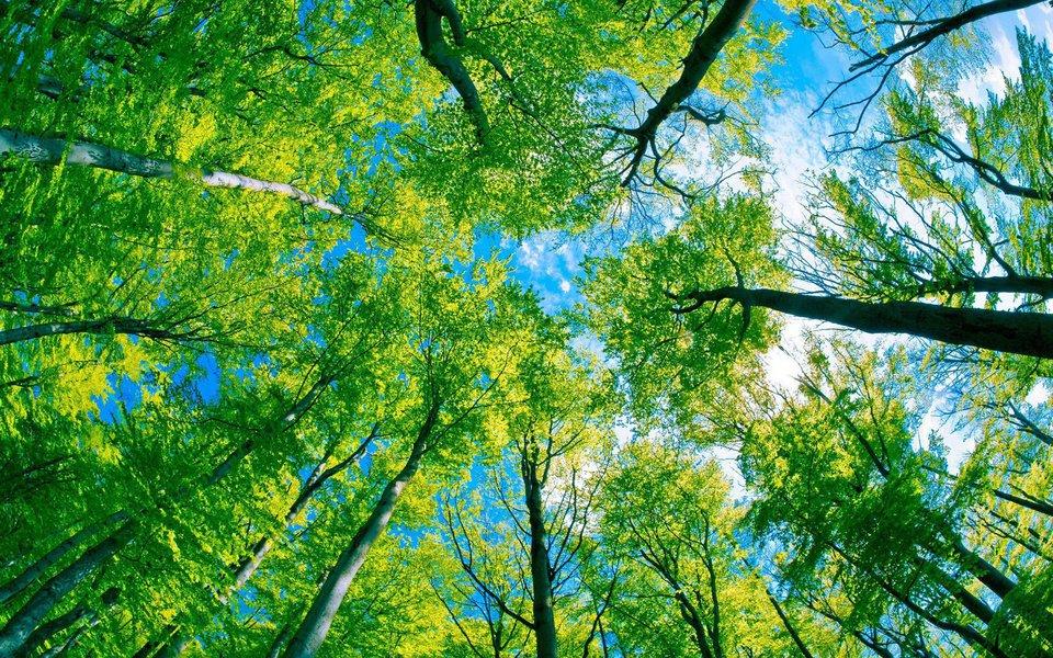 Dez mil novas árvores serão plantadas em diversos pontos de Fortaleza. A ação acontecerá em diversas localidades como parques, vias urbanas e orla marítima de Fortaleza, com início na Barra do Ceará até a Barra do Cocó, no Caça e Pesca