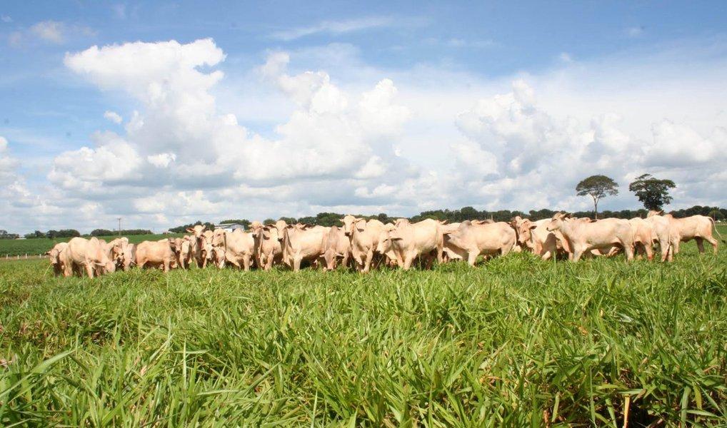 Balanço feito pela Confederação da Agricultura e Pecuária do Brasil(CNA), aponta que a participação do setor no Produto Interno Bruito (PIB) passou de 21,4% registrados em 2014, para uma projeção de 23% atéo final deste exercício; segundo a CNA, a agropecuária brasileira deverá crescer 2,4% em 2015, apesar de a agricultura não apresentar crescimento e de o agronegócio registrar retração de 0,6% no ano