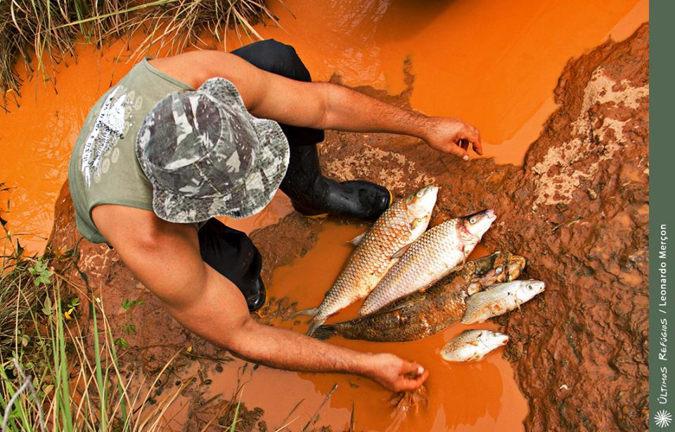 Defensores da mineradora ignoram definição de toxicidade para amenizar impactos do rompimento da barragem em Mariana; não somente metais pesados têm efeito nocivo