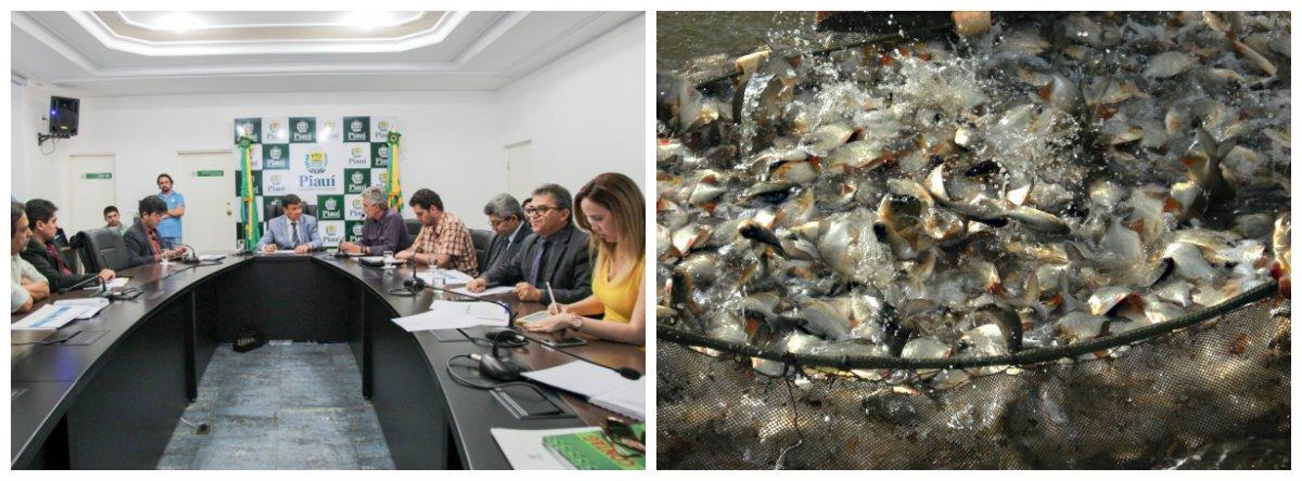 Através de uma parceria público-privada, será construído em 2017 o Complexo de Piscicultura do Piauí, cuja previsão é de que irá produzir 5 mil toneladas de peixes por ano; o empreendimento, que irá funcionar no município de Nazária, será instalado numa área de 50 hectares e contará com um frigorífico para o processamento dos pescados, uma fábrica com capacidade para produzir 20 toneladas de ração e um centro de produção de alevinos; previsão é que, em 2018, as primeiras unidades já entrem em operação