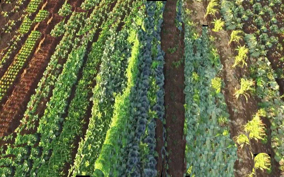 """No município baiano de Piraí do Norte, o suíço Ernst Gotsch conseguiu transformar, praticamente com as próprias mãos, 1200 hectares de área desértica num oásis de vida e abundância de alimentos. Tudo isso mantendo um equilíbrio perfeito entre agricultura de larga escala e ecossistema. Gotsch usa o método chamado de """"agricultura sintrópica"""", e os resultados que alcançou começam a chamar a atenção no Brasil e no mundo. Na foto de abertura, Ernst Gotsch."""