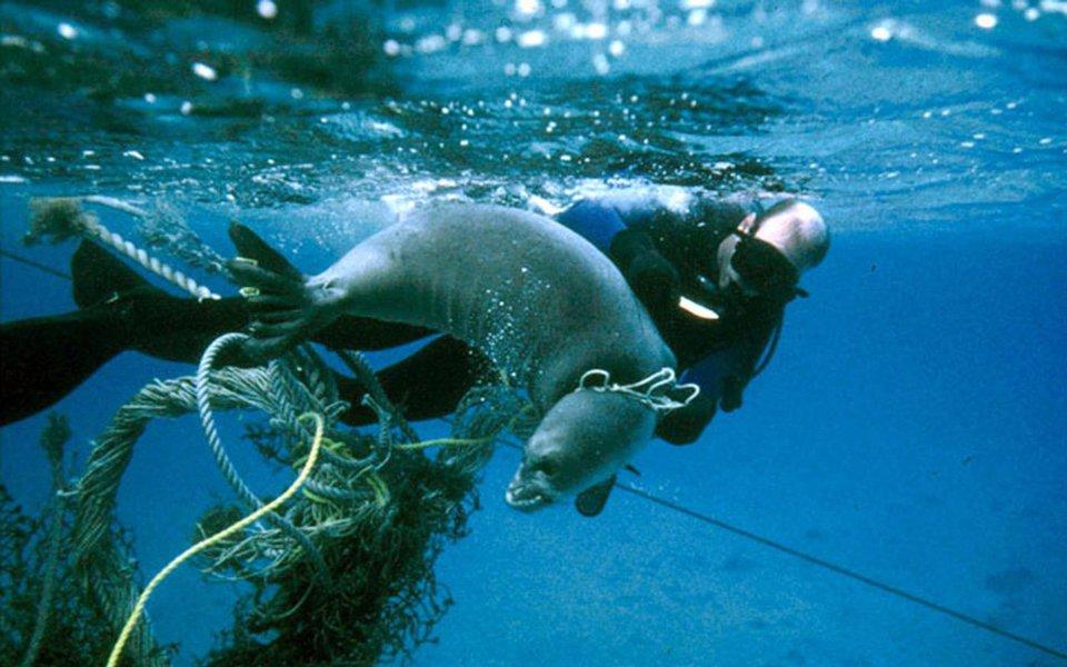 Cetáceos, gaivotas, tartarugas, peixes-boi, polvos e quimeras dos abismos. Flagrantes da vida marinha fotografados pela NOAA, a agência norte-americana que zela pelos oceanos e a atmosfera.