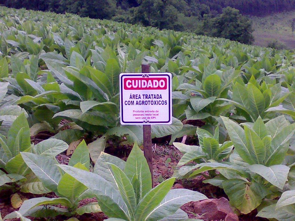 A fiscalização é acompanhada peloFórum Cearense de Combate aos Impactos do Uso de Agrotóxicos. O anuncio será feito amanhã, com os resultados da fiscalização feita neste mês de junho