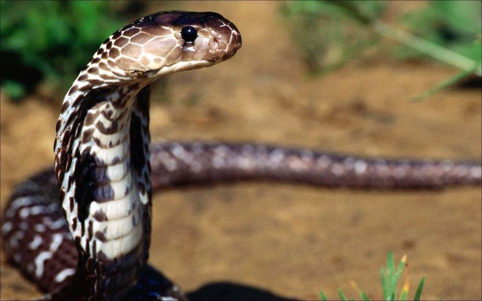 Estamos diante do ovo da serpente, que nos antecipa, no presente, o que o futuro no reserva. Resta-nos enxergar as saídas que nos distanciem da premonição do que está sendo gestado