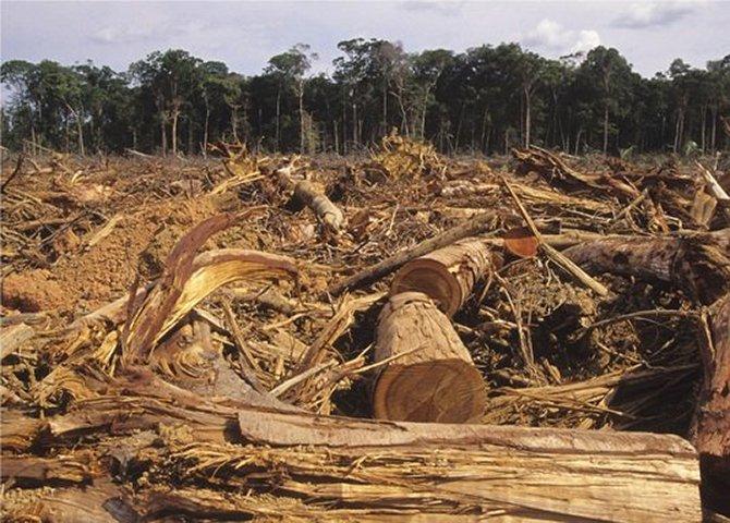 Final de 2014 e início de 2015 foram catastróficos para o meio ambiente no Brasil