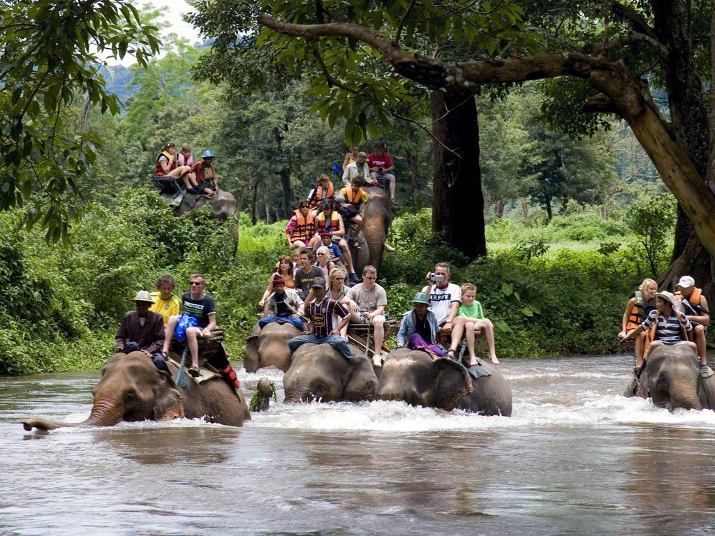 Bali elephant tracking