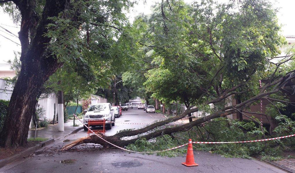A vítima era o passageiro de um táxi que passava pelo cruzamento das ruas Itacolomi e Alagoas, quando foi atingido por uma árvore. Segundo a Polícia Militar, o motorista do veículo foi resgatado com vida, mas o passageiro ficou preso nas ferragens e morreu