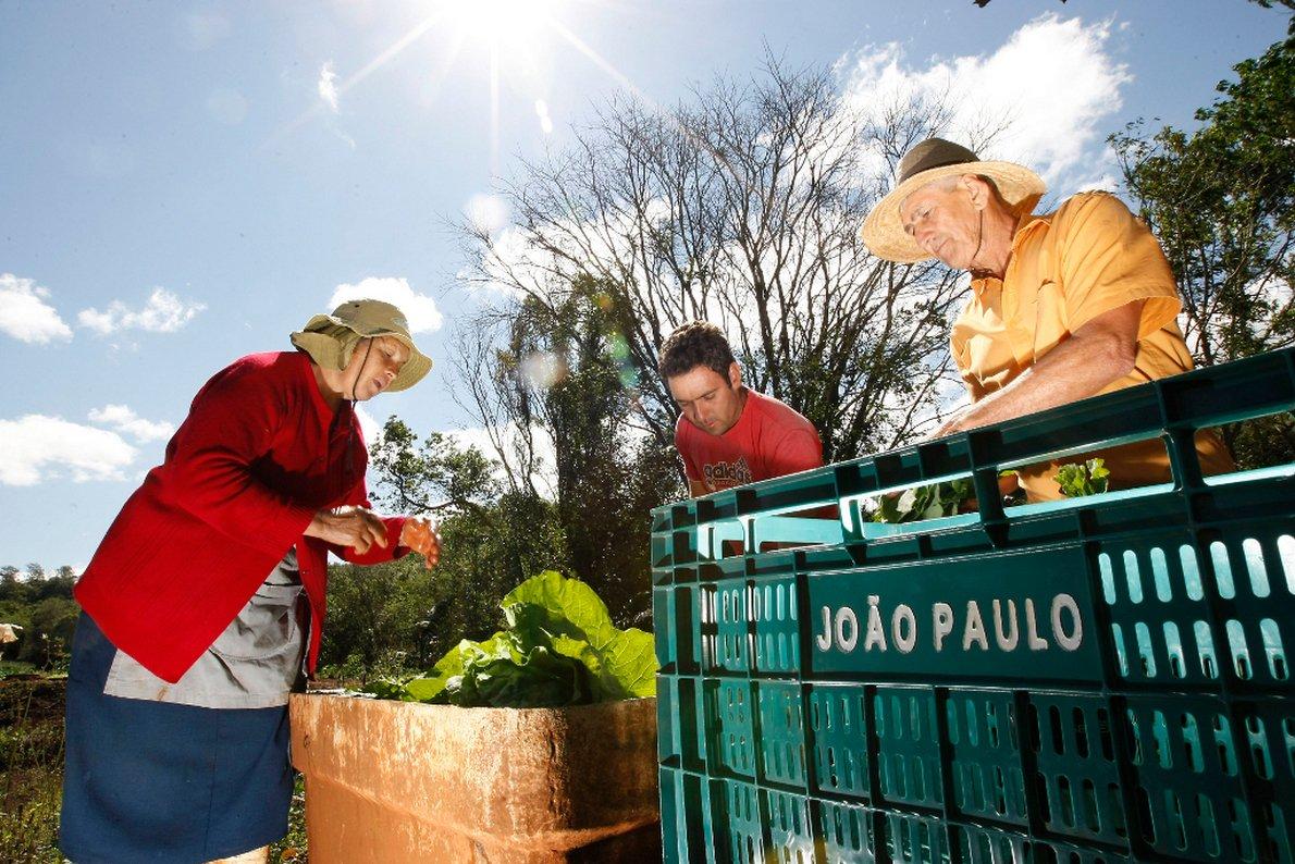 Agricultura Familiar. familia de Jo�o Paulo e seus pais na horta, em Arapongas, produz para a merenda escolar. Arapongas, 24-09-13. Foto: Hedeson Alves