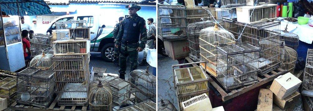 Uma operação do Batalhão de Polícia Ambiental (BPA) apreendeu mais de 200 pássaros de pequeno porte em Arapiraca, no Agreste de Alagoas. As pessoas que estavam comercializando os animais conseguiram fugir. As aves foram levadas para a sede do Ibama, em Maceió