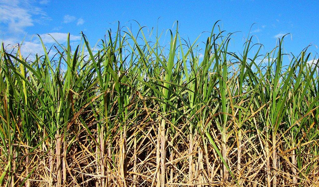 Os produtores de cana-de-açúcar do Nordeste solicitaram, nesta sexta (23), durante reunião do Conselho Deliberativo da Sudene medidas para fomentar a irrigação e a silagem na Zona da Mata da região; o objetivo é amenizar os efeitos da seca para o setor canavieiro, cuja produção rende um faturamento anual em torno de R$ 8 bilhões