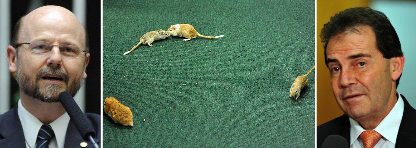Deputado questiona: 'quem são os ratos da política?'