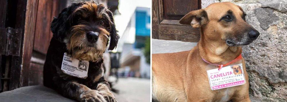 Em Cuba, cachorros de rua recebem identificação e cuidados de saúde