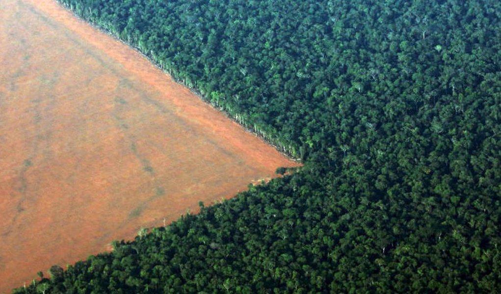 Greenpeace: em um ano, Brasil desmatou equivalente a um milhão de campos de futebol