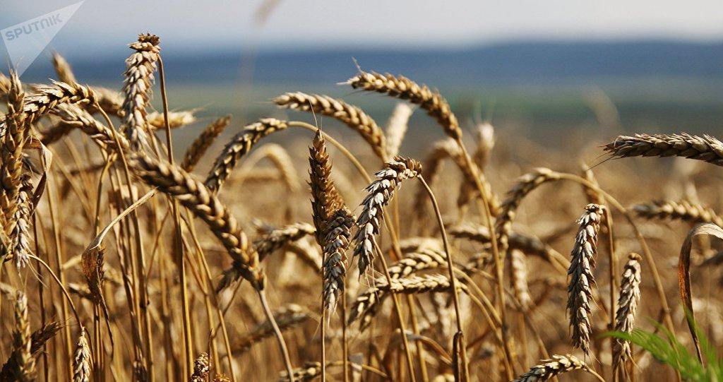 Guerra comercial deixa agricultura dos EUA menos competitiva